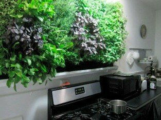 Vườn rau thơm trong bếp