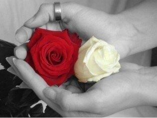 Mùa Vu Lan, niềm hạnh phúc hoa hồng cài áo