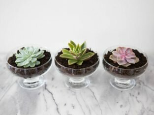 4 ý tưởng cắm hoa đẹp, độc đáo cho gian bếp bừng sáng