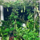 Kinh nghiệm trồng cây trên sân thượng: Thuốc trừ sâu tự chế